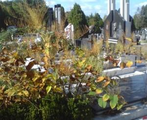 Falopia bezanijsko groblje
