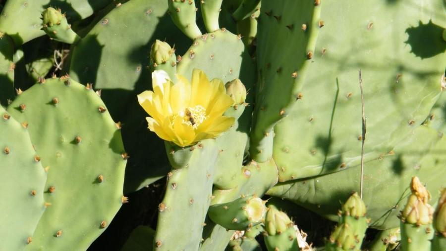 R kaktus