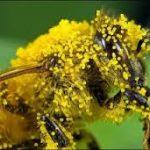 Elektricitet pčela i zeolit