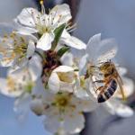Mala škola medonosne flore – Džanarika