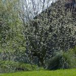 Mala škola medonosne flore – Iva