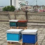 Podrži urbano pčelarstvo
