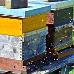 U goste BUP-u 22.12.(nedelja) u 10h na VI spratu Beograđane dolazi Nenad Savić profesionalni pčelar iz Ripnja