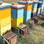 Na VI spratu Beograđanke 15.12. u 10h o načinu skupljanja pčelinjeg otrova pričaće Goran Stanojević