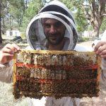 U nedelju 19.01.Vuk Bijelacće nam preneti deo svog iskustva kao profesionalnog pčelara na velikim pčelinjacima Australije i Novog Zelanda.