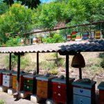 24.12. u 19 i 30 časova prate uživo predavanje Predraga Brajkovića sa temom Modifikovana tehnika pčelarenja dvojnim zajednicama u funkciji biološkog suzbijanja varoe