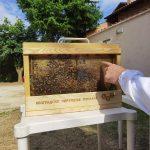 """Kurs """"Urbanog pčelarstva za početnike"""""""