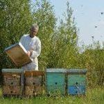 Savremeni pristup pčelarenju porodice Balint i nekoliko nepisanih pravila u pčelarstvu.
